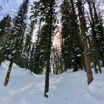 Big Sky - Trees